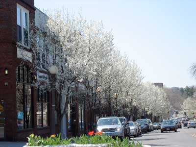 Street with blooming trees